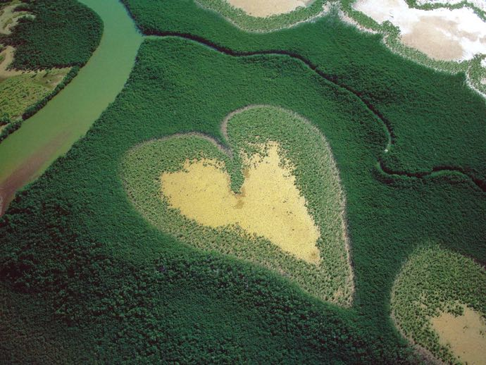 France - Nouvelle Caledonie - Mangrove_1