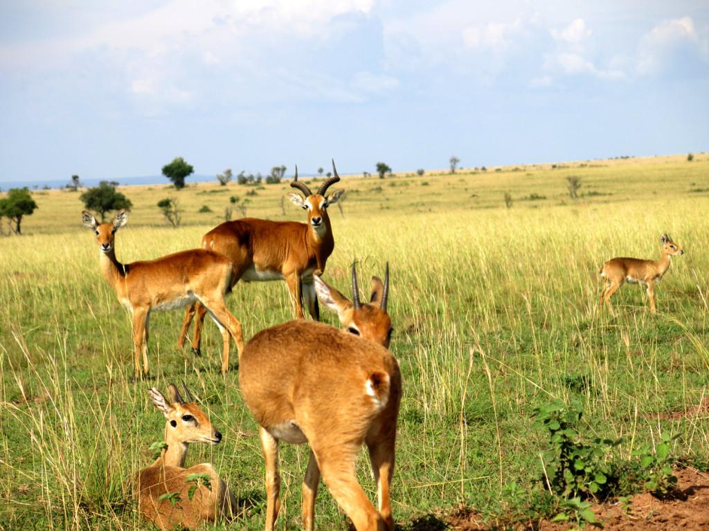 Partir en Ouganda ça vous intéresse ? On vous dit tout !2