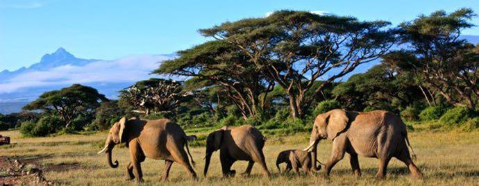 safari_kenya_21