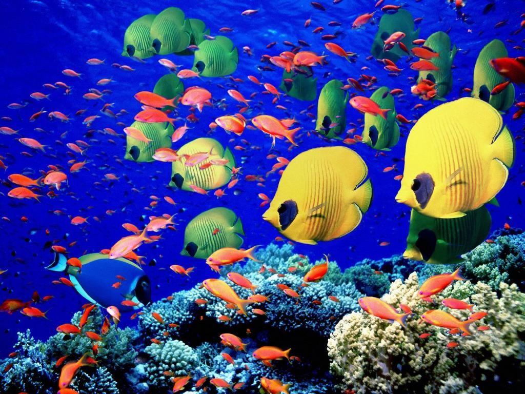 Nos vacances aux Maldives dans ce paradis tropical !3