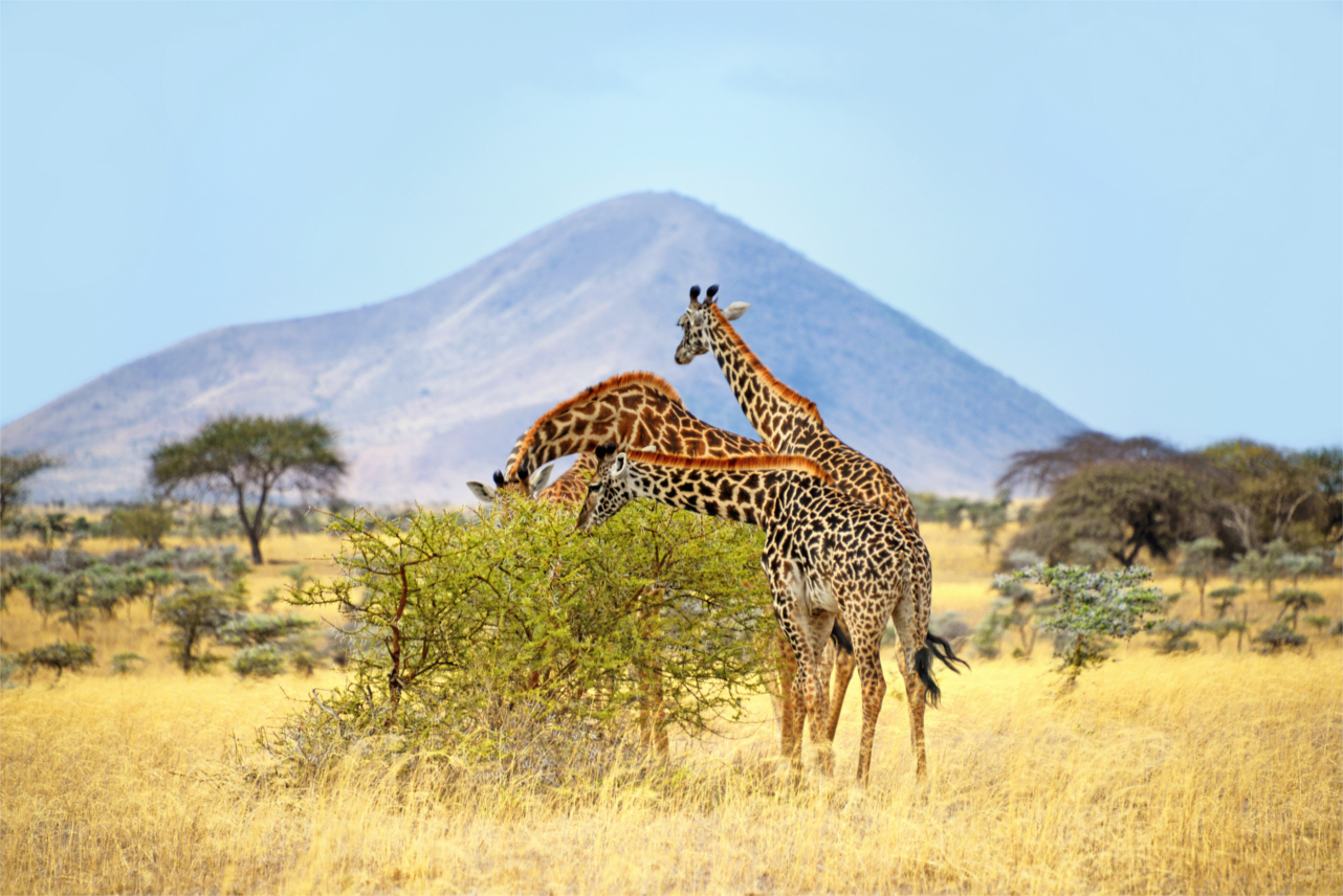 Voir le mont Kenya, la montagne qui brille
