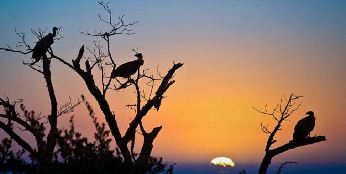 Parc-national-Kruger