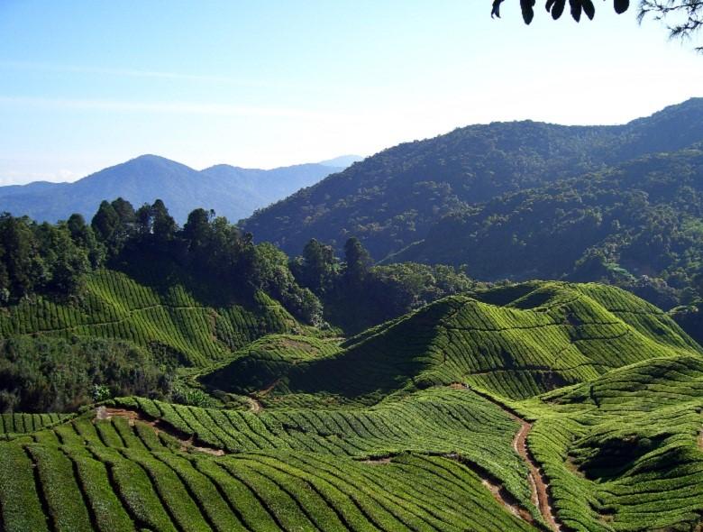 Bilan d'une petite escale en Malaisie, les incontournables à voir