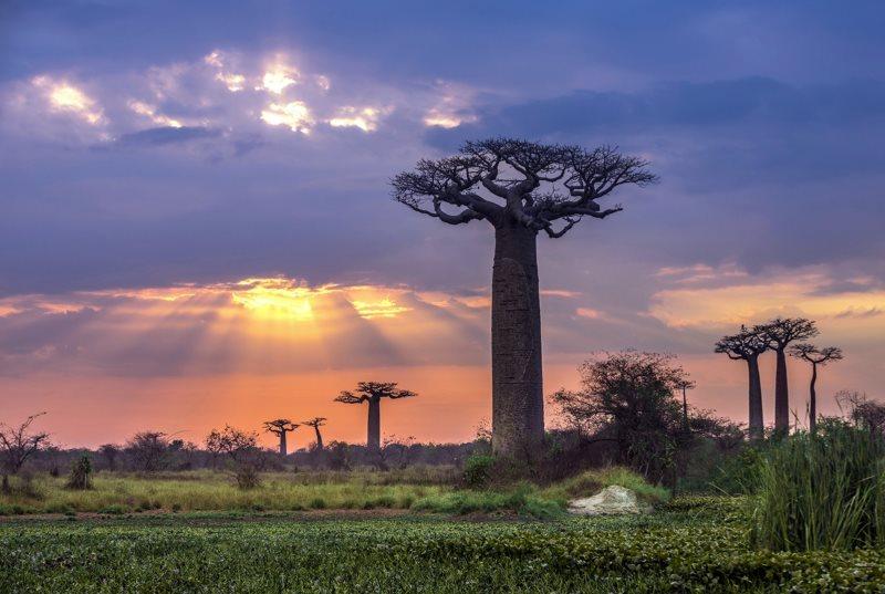 Madagascar : une destination de rêve pour un dépaysement complet
