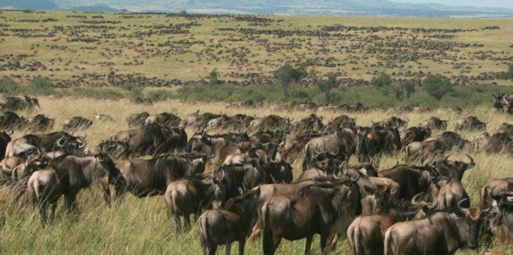 Top des parcs à découvrir durant un séjour au Kenya