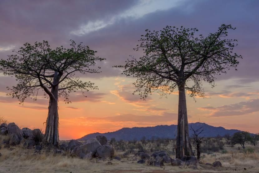 Le parc national Saadani, une destination côtière en Tanzanie