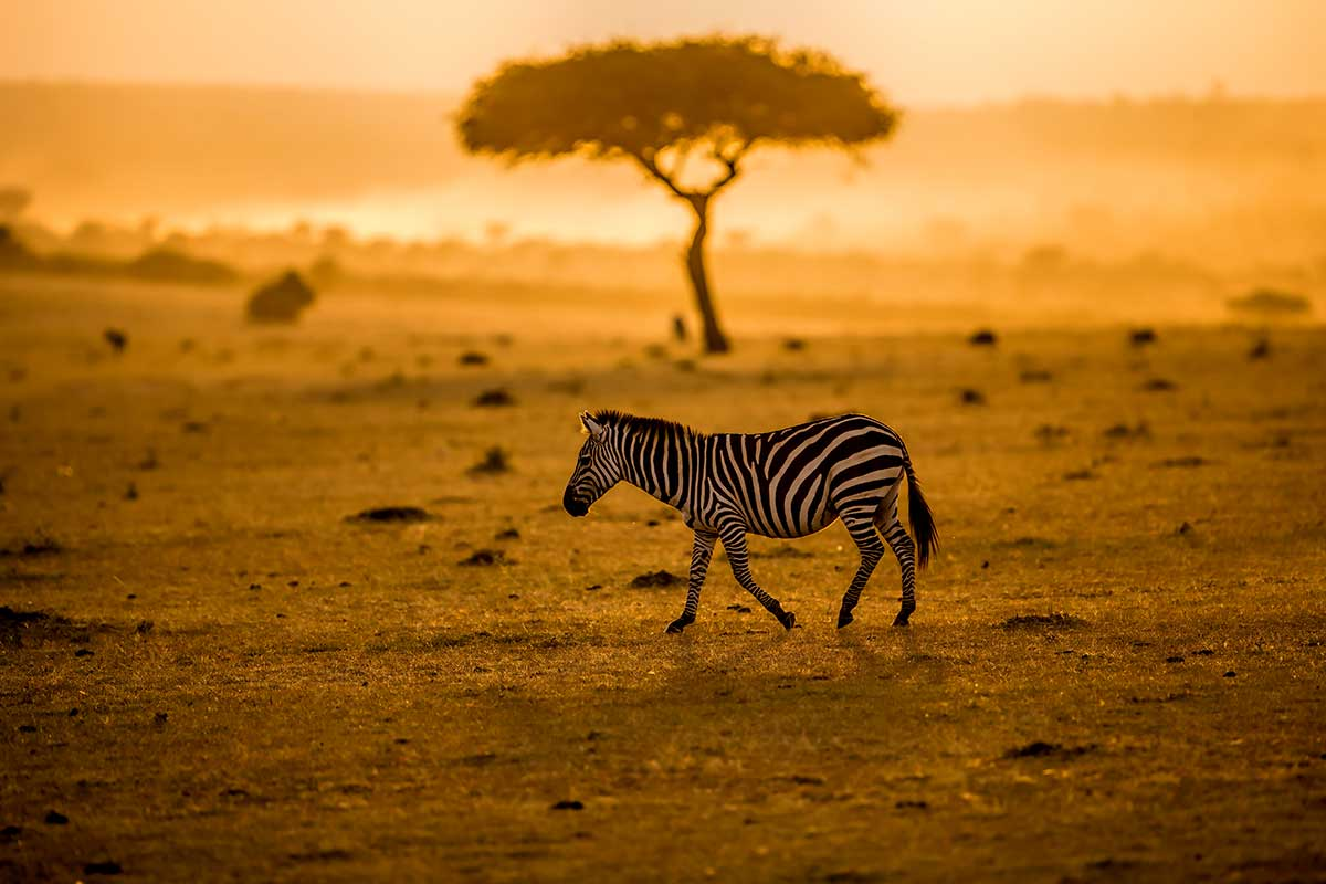 Quelques sanctuaires animaliers à découvrir lors d'un périple sur le continent noir