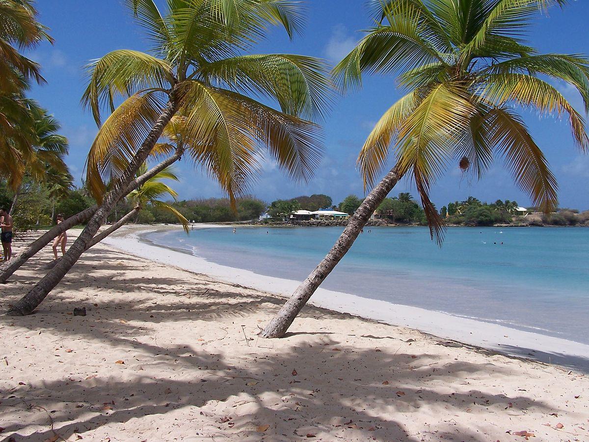 Sable blanc et cocotiers, à la découverte de la Martinique
